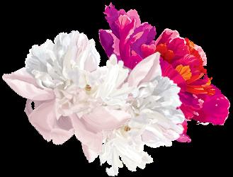 Blossom Bottom Left
